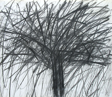 Tree I, 2006, charcoal on paper, 47×56 cm